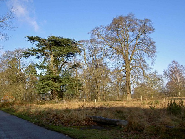 Clumber Park trees