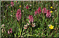 SD2811 : Early Marsh Orchid (Dactylorhiza incarnata) by Mike Pennington