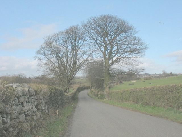 Arching trees near Plas Tirion Farm in winter