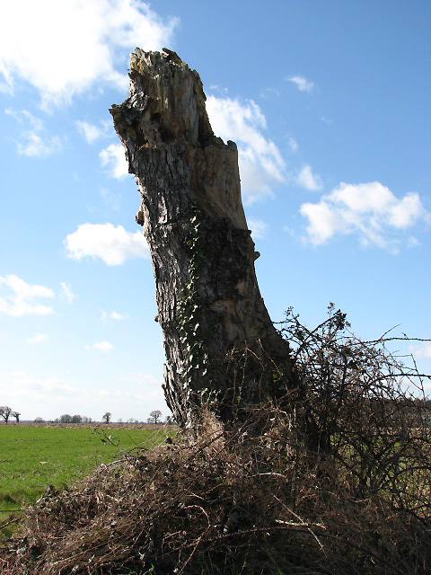 Remains of a tree