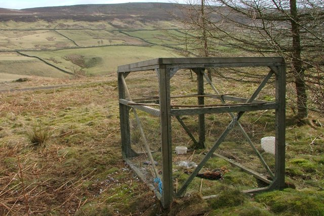 Larsen Trap, Cringle Moor Plantation