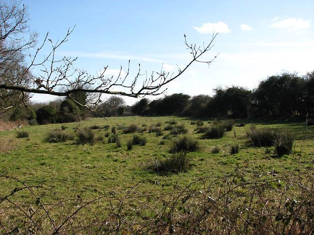 Pasture with sedges