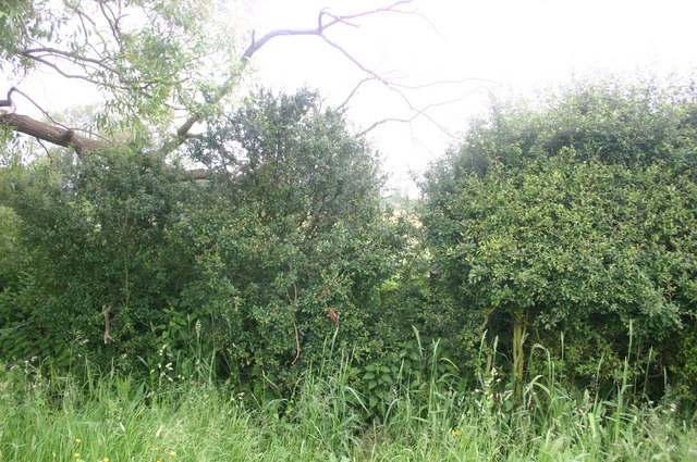 The Bernwood Way squeezes through the hedge