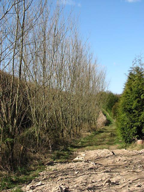 Footpath to Antingham