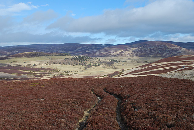 Grouse moor above the Crathie to Gairnshiel road