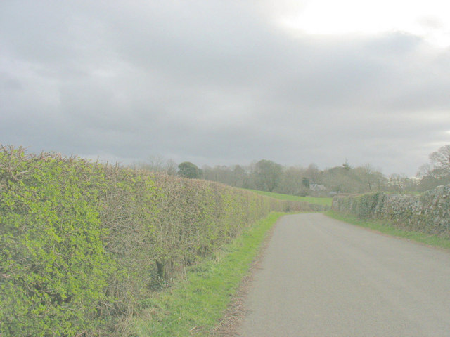 Well trimmed hedges along the Pencefn road