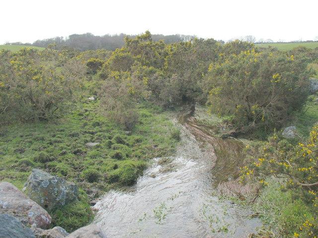 Gorse growing on wetland in a hollow between drumlins