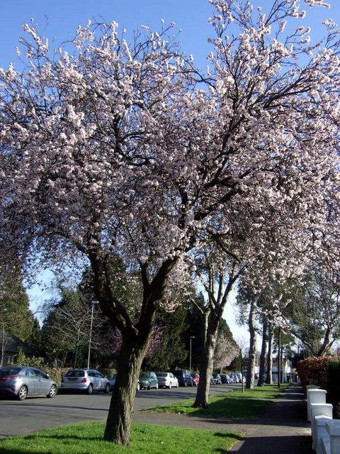 Five Mile Drive blossom