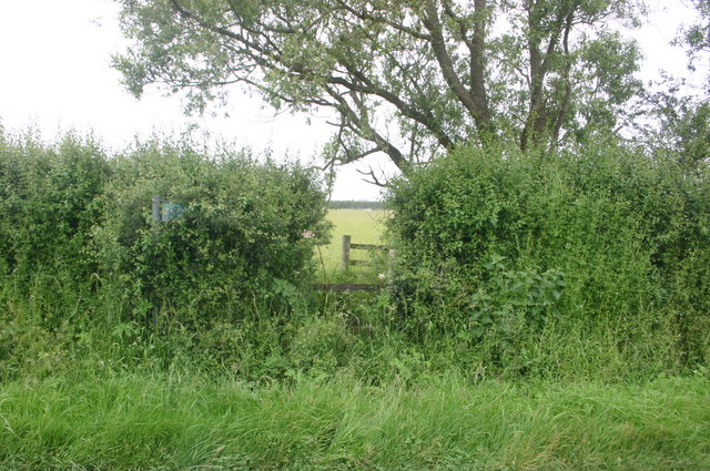 The Bernwood Way cuts through the hedge