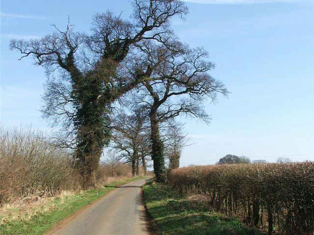 The tree lined lane from Waterstock