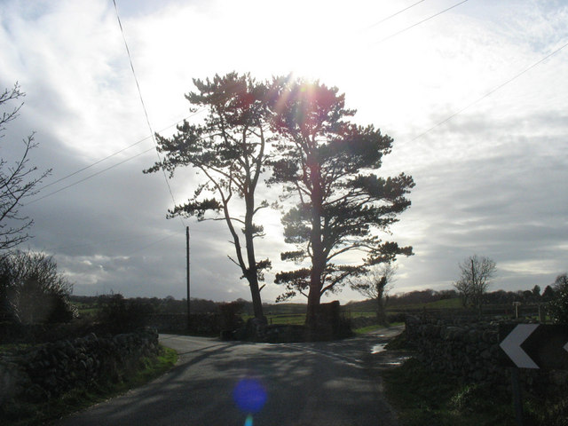 Scots pines at the entrance to Bryn Llan