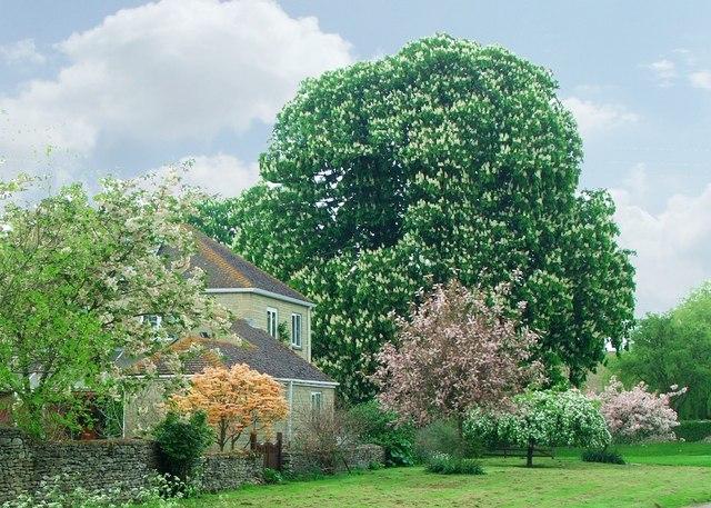 Spring blossom at Oddington