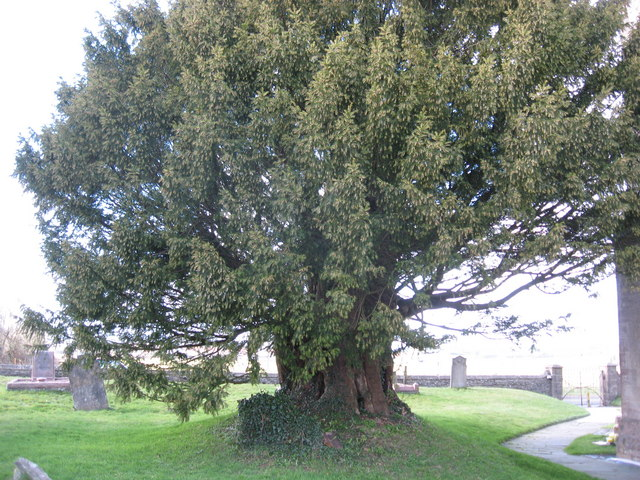 Yew Tree, Ston Easton