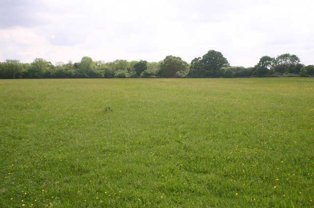 Meadows near Rushbeds wood