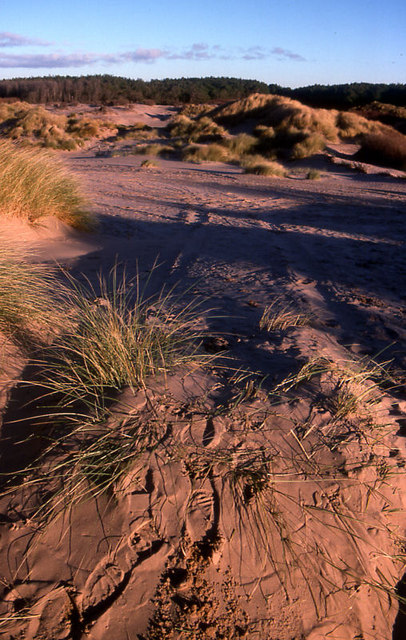 Dunes at Formby Point