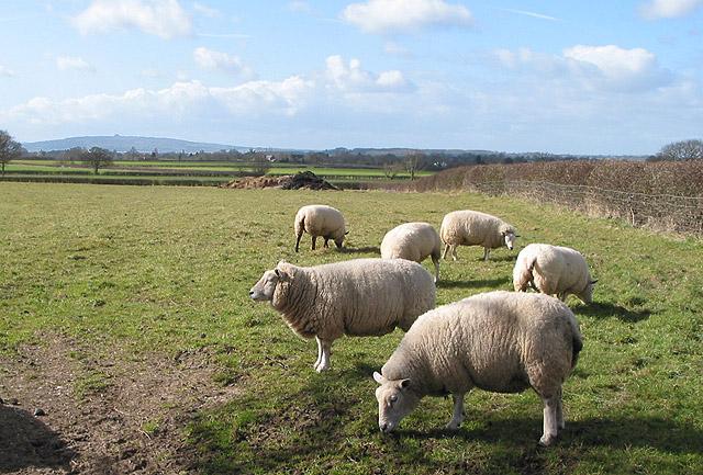 Pasture east of Staunton