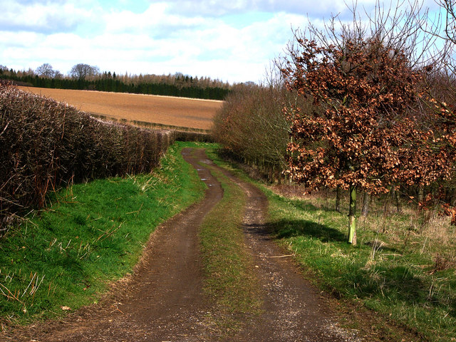 Bridleway to Lower Bordean