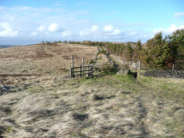 Segregated paths, Royd Height, Rishworth