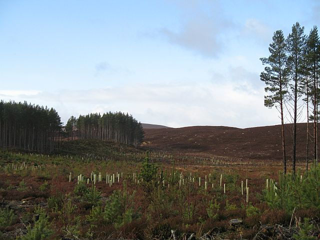 Clearing, Inveruglas Forest