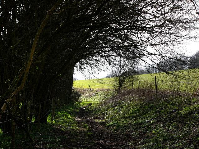 Cellar Lane, near Ramsdean