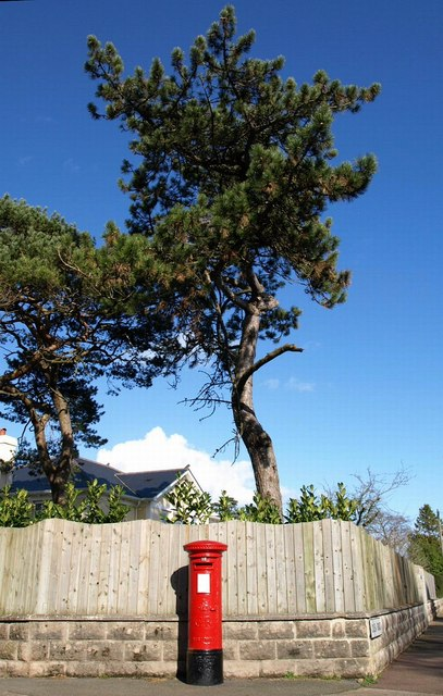 Pillar box and pine tree, Lincombes