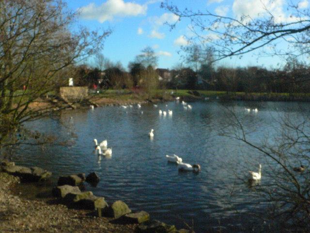 Lake in Hillfield Park