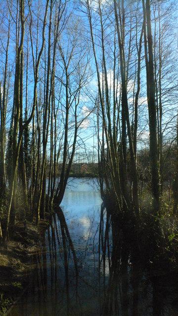 Cran Brook entering lake in Hillfield Park