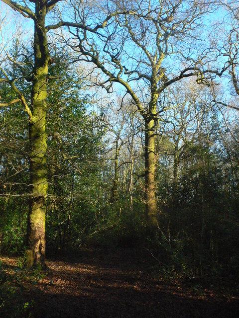 Widney Woods