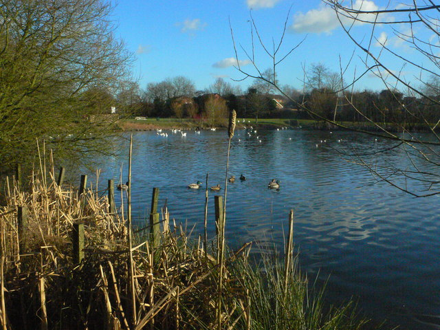Hillfield Park lake