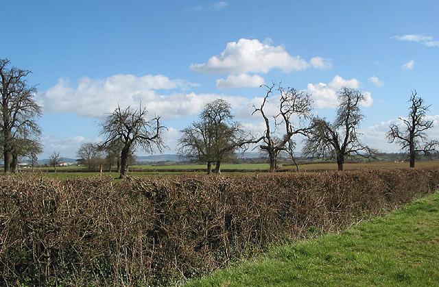 Orchard near Little Sandpits Farm