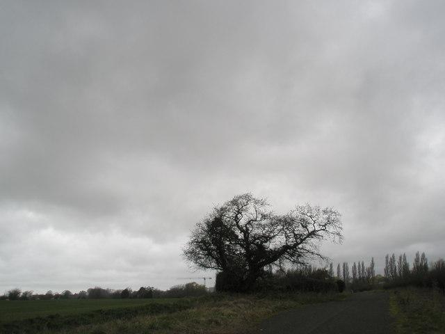 Tree between Bosham House and Compass Barn