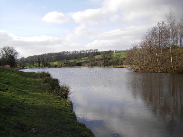 Lake at Forrest Hills