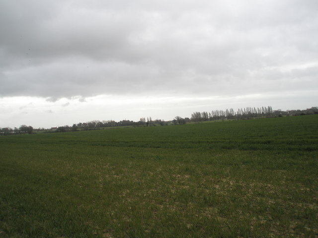Farmland to south of A259, Bosham