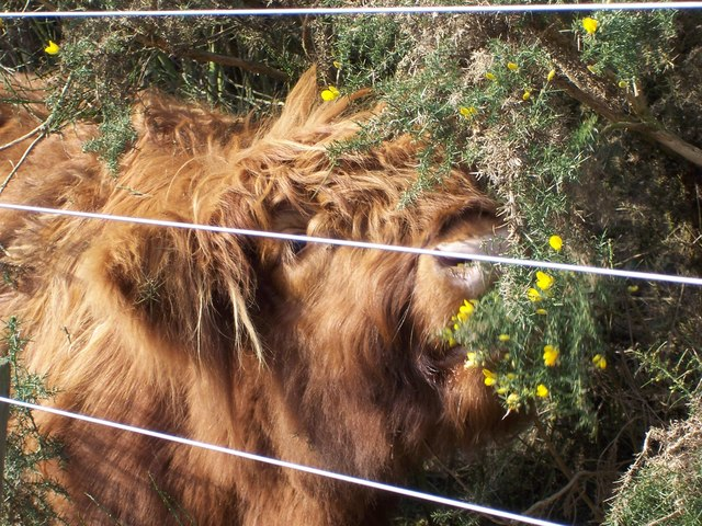You can get close to the animals at Old Moor