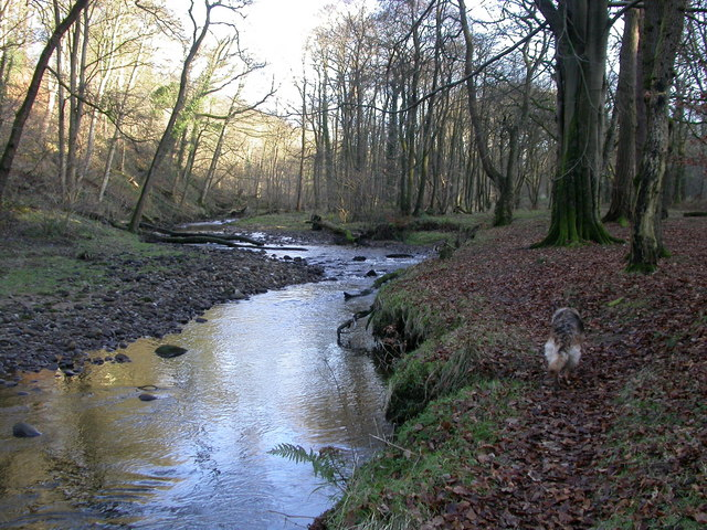 River Brock, Boggy wood