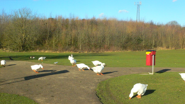 Hillfield Park