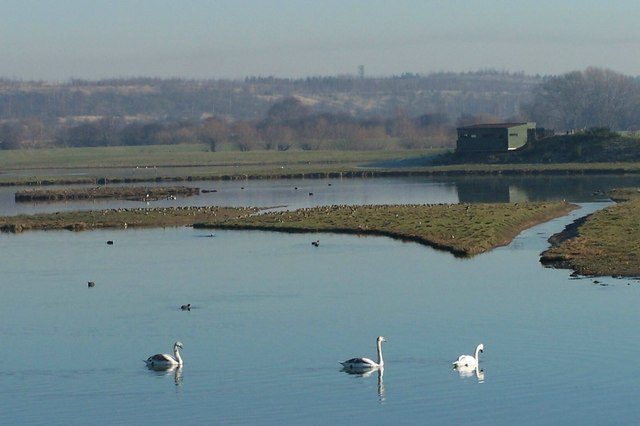 Swans on Mere Pond at Old Moor