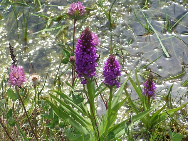 Wild flowers at Old Moor