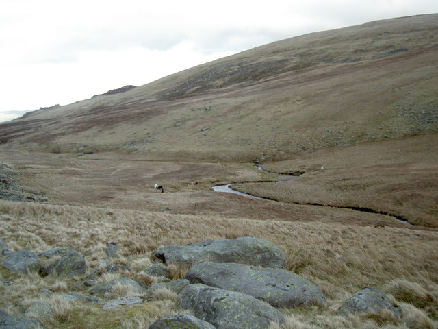 Horses grazing by the stream through the valley