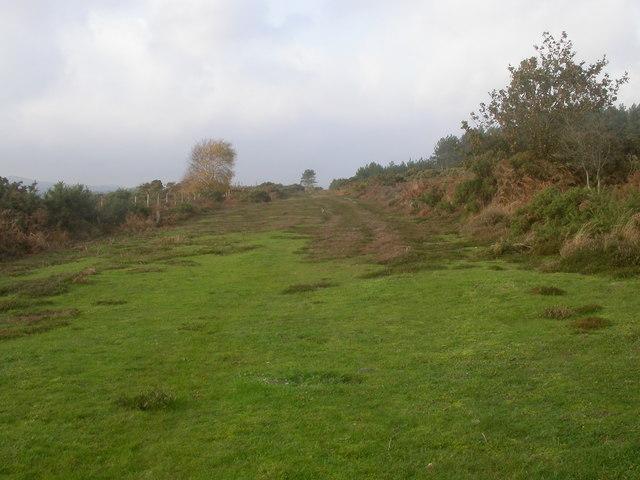 Path, Hartland Moor