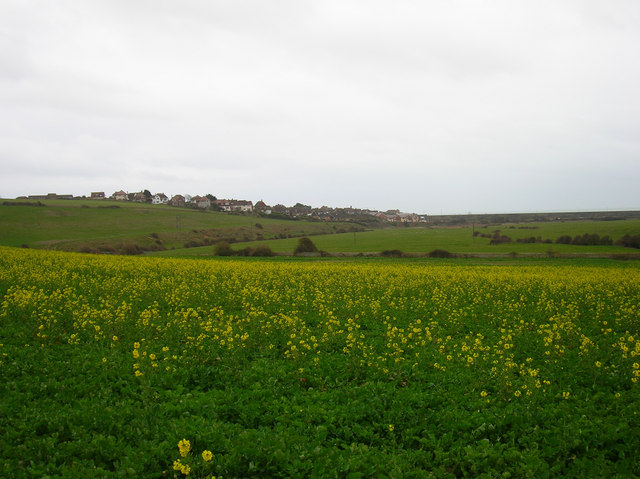 Flowering Rape, Bishopstone