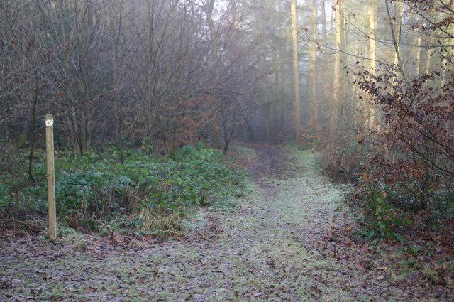 Footpath in Lodge Wood