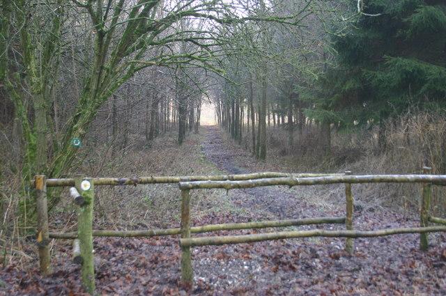 Path through Scrub Wood