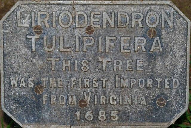 Tulip Tree Plaque