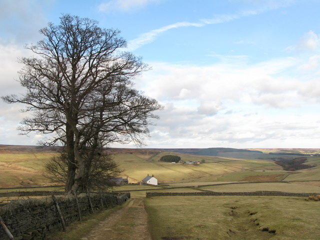 Track and pastures above Whitelees (2)