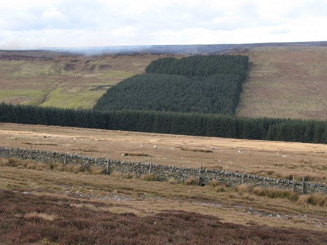 Moorland, pastures and plantation above Nookton Burn