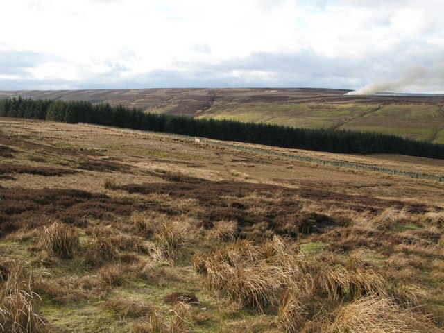Moorland and plantation west of Whitelees