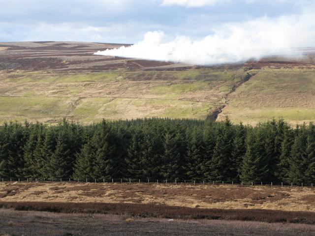 Whitelees Plantation (2)