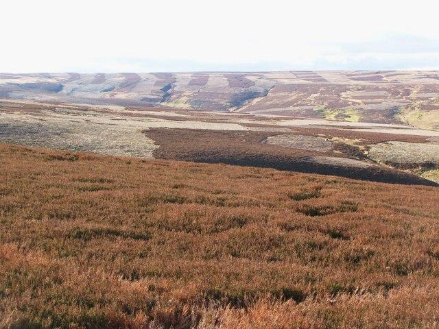 Moorland around Grindstone Cleugh (2)