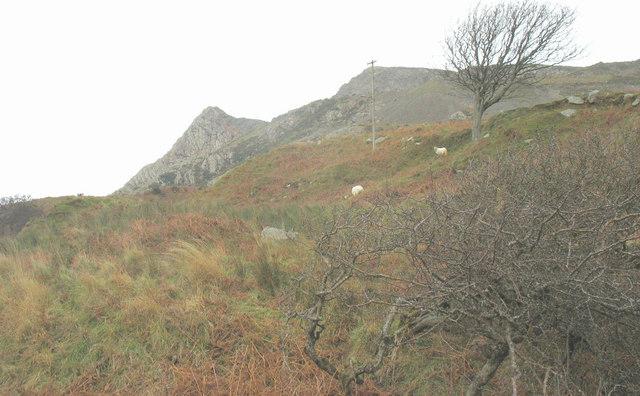 Rough grazing below Trwyn y Gorlech quarry